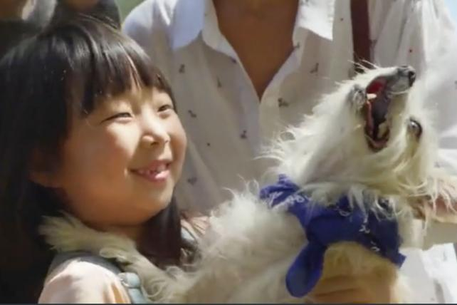 Watch the newest ads on TV from Subaru, Target, Google Home and more