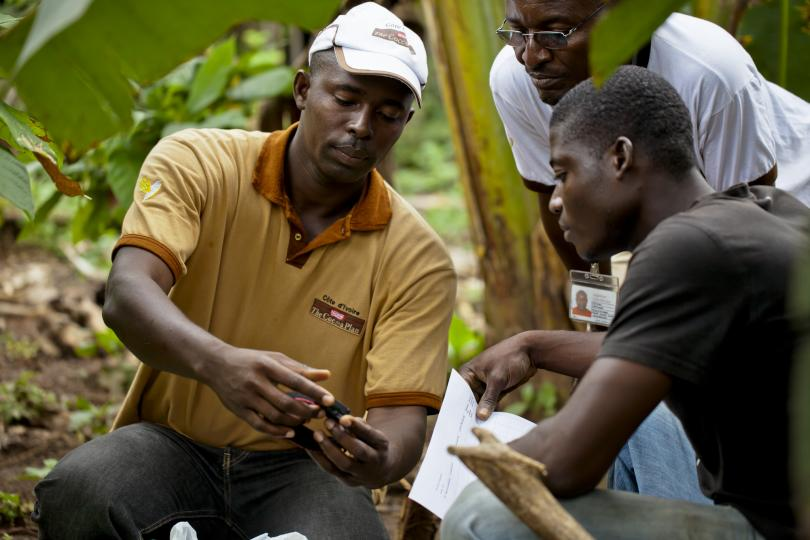 More than 6,000 farmers in Côte d'Ivoire received training in 2012 as part of the Nestlé Cocoa Plan plan to achieve supply chains free from child labor. By this year, Nestlé aims to train a further 24,000.