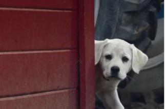 Budweiser - Lost Dog