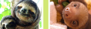 Animal Planet Slothville