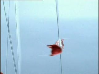 Aquabona Heartfish