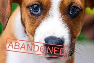 Social Tees Tinder Puppy Love (slideshow)