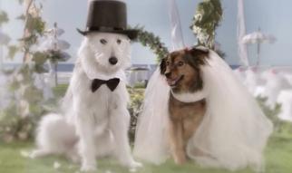 Citroen Dog Romance