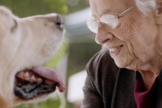 Merrick Pet Care First Impressions