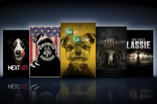 MyDog/The Swedish Exhibition & Congress Centre The Next Lassie