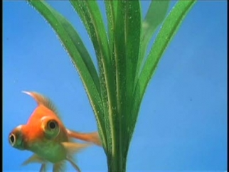 The Oregon Coast Aquarium I Want To Go To The Aquarium