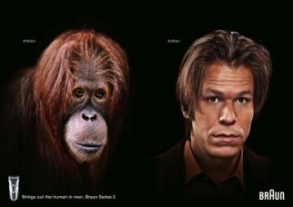 Braun Orangutan