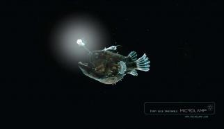 Microlamp Fish