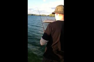Shark Week Shark in Lake Ontario