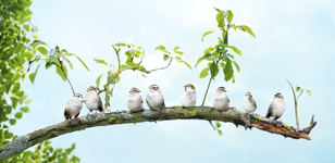 Stihl Birds