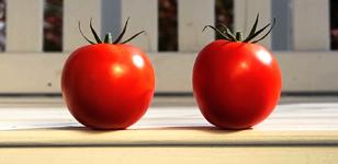 Tomato Romp Savage Hands