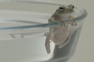Triodos Bank The Boiling Frog Myth