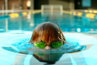 USA Swimming Alligator