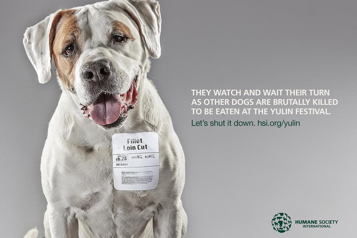 Humane Society International Stop Yulin 2015 Video Creativity Online