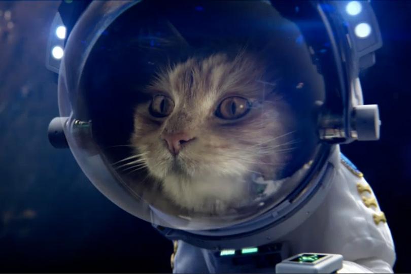 Cat Vs Dog Game Online